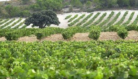 Hablando sobre Denominaciones de Origen de #Vino: DO Abona