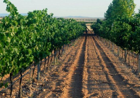 Catando los #vinos de @Boxpremier: Bro Valero Syrah 2009