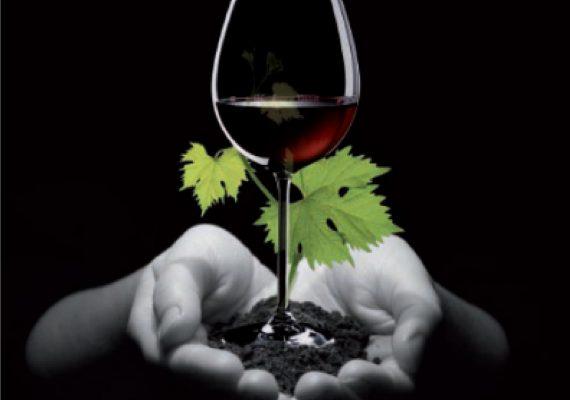 Qué es un vino ecológico y cuáles son los mejores