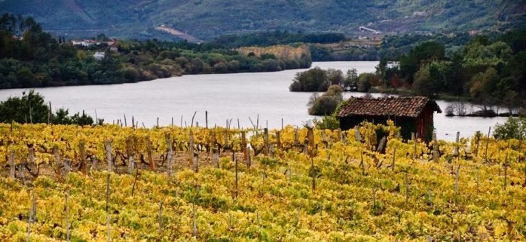 Viña da cal: «Contamos con el privilegio de ofrecer al mundo las experiencias que nuestros vinos provocan en el paladar»