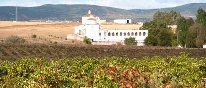 Más que una bodega: en Toribio Viña Puebla se cultivan premios internacionales