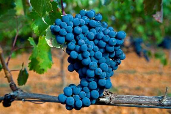 Leyenda del Páramo, grandes vinos que hacen historia