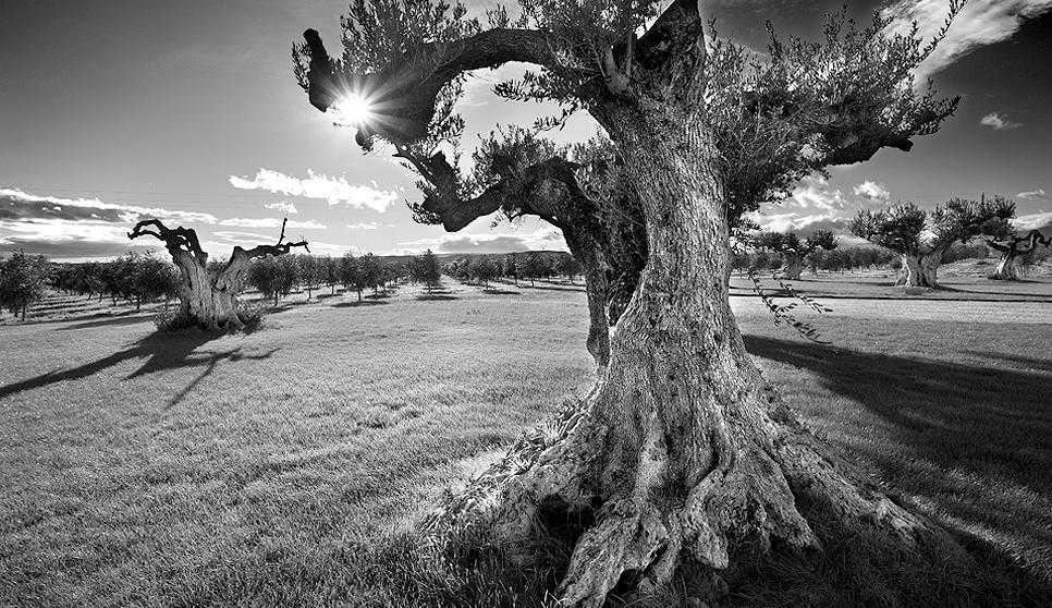 Hacienda Queiles, aceite de oliva virgen extra