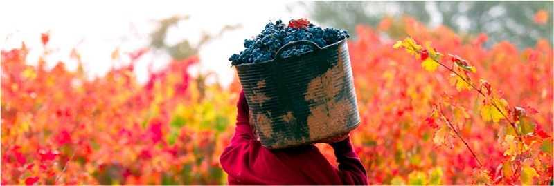 vendimia vinopremier