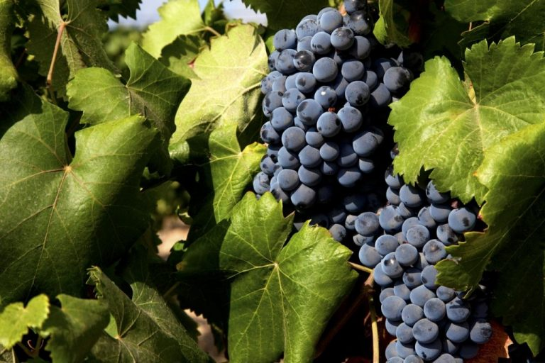 Bodegas Estefanía, mucho más que un vino