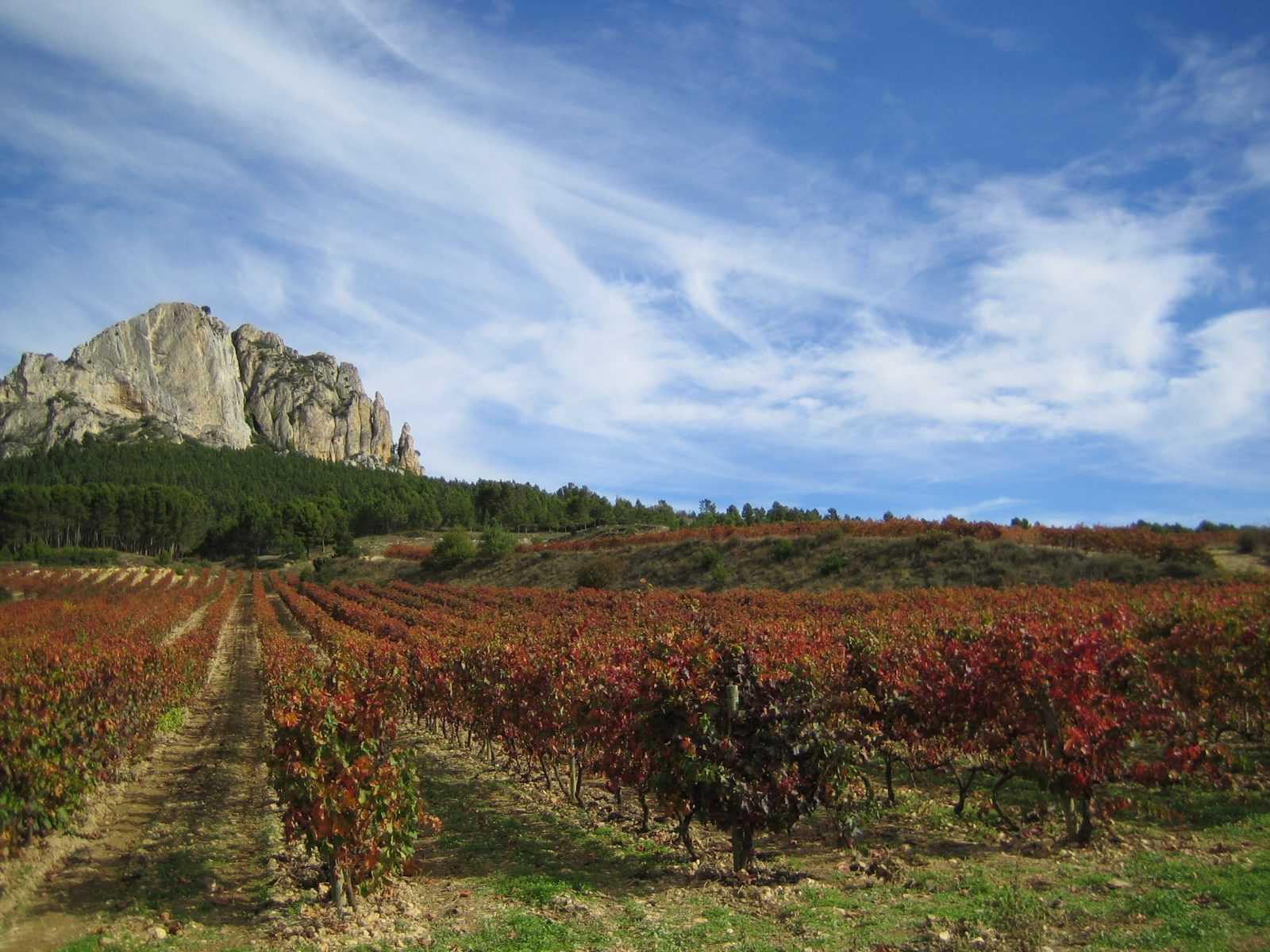 Bodegas Castillo de Sajazarra  lanza al mercado su primer vino ecológico.