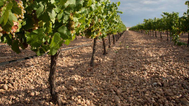 Descubre los vinos de Bodega Tres Pilares