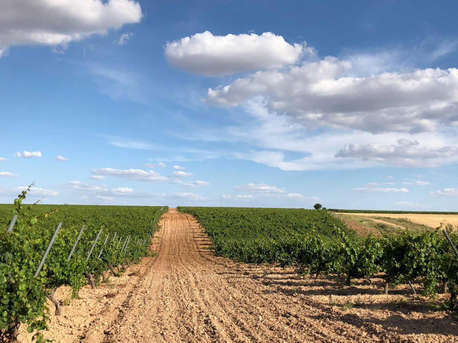 Nos adentramos en Bodegas Felix Sanz-Viña Cimbrón para enamorarnos de sus vinos y su tierra
