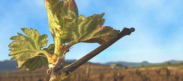 bodegas Viore vinopremier