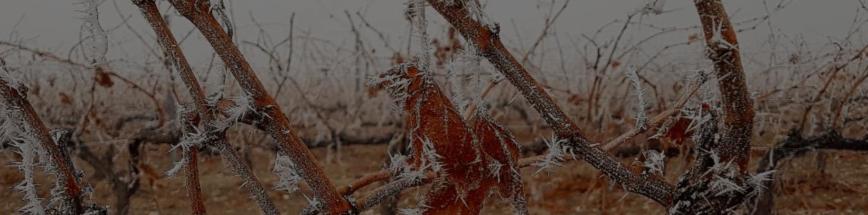Lambuena, la importancia del suelo