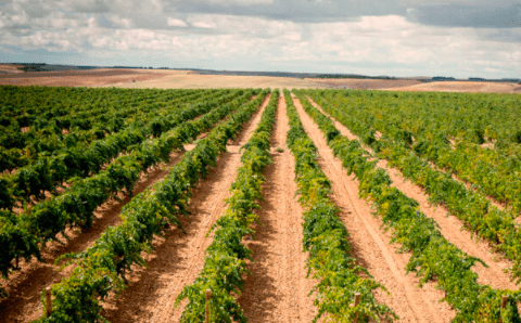 El vino blanco Caecus Verderón ha sido calificado como el mejor vino calidad-precio por Tim Atkin