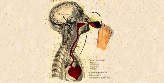los efectos del vino sobre el cerebro