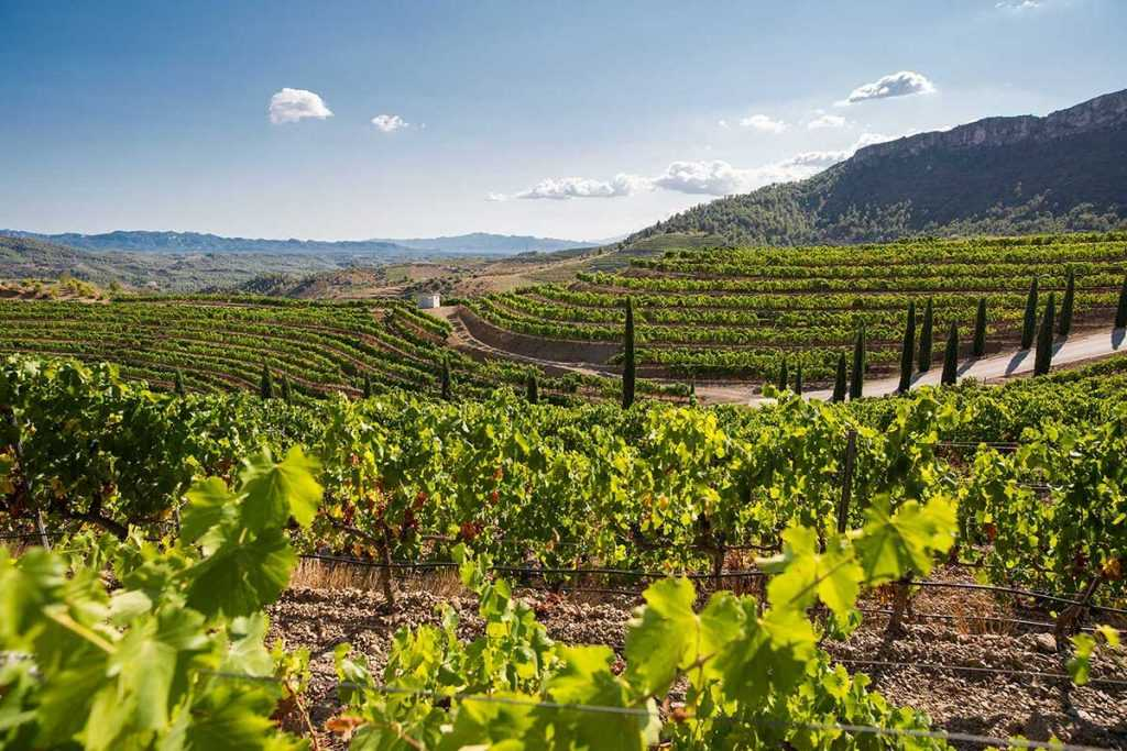 Ribera del Duero - Vinos de España